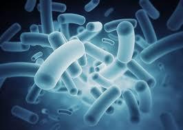enteriko mikrobioma